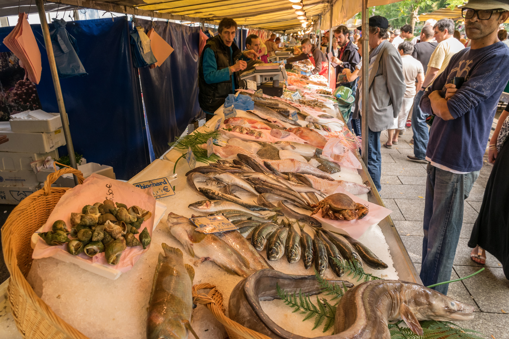 The mid-morning sun is already beginning to fall on this display of fresh fish on ice