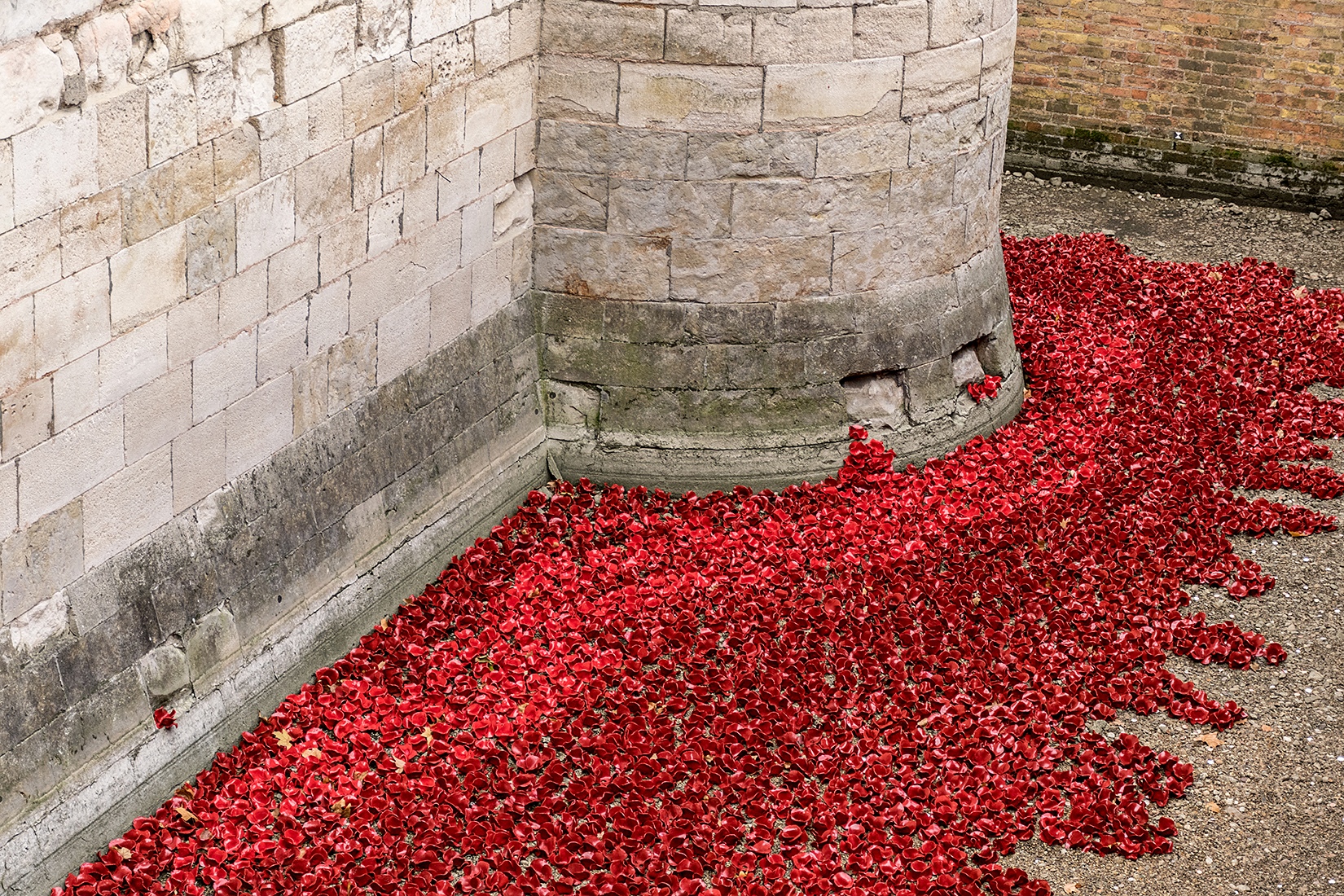 Poignant detail of the poppies at the south east corner